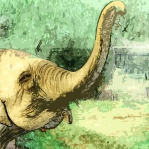 trompa de elefante