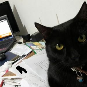 gato preto com computador