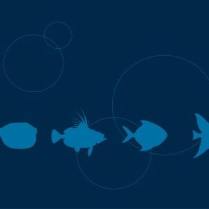 diálogo de peixinhos